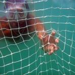 Telas de proteção será testada contra ataques de tubarão