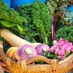 Saúde - 6 Vegetais do outono e seus benefícios de saúde