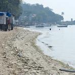 Diversos - Inea continua a investigar as causas da mortandade de peixes na Baía de Guanabara