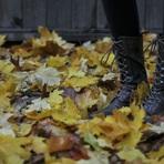 Mulher - Sapatos da moda outono 2015