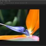 Fotos - Melhorando a nitidez da sua imagem no Photoshop – High Pass