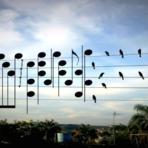 Artista brasileiro transforma Pássaros em notas musicais e toca a música deles