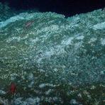 Descoberta vida em rochas no oceano profundo