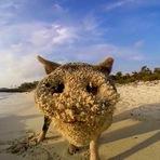 Os amigáveis moradores desta ilha mágica nas Bahamas quererem conhecê-lo.