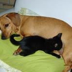 Educação -  Insólito: Cadela pariu gato na cidade de Nampula