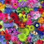 Mandar flores para o Brasil inteiro nunca foi tão fácil