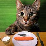 Animais - Tirando cinco dúvidas sobre a alimentação de gatos