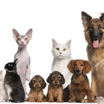 Animais - Teste: que animal você se parece?