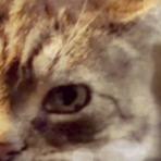 Pudditat - O gato guia