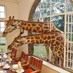 Em hotel do Quênia, girafas são convidadas para o café