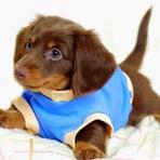 Moda & Beleza - Aprenda à Fazer uma Roupinha Para o seu Pet!
