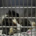 Utilidade Pública - Veterinário terá de pagar R$ 8 mil por maus-tratos a animais