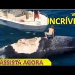 Surfista escala e surfa baleia morta por tubarões