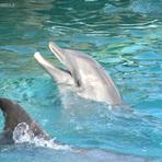 Conheça Dolphin Discovery e a Isla das Mujeres!