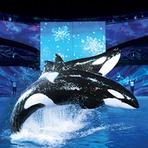 A celebração do Natal no SeaWorld