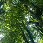 """Meio ambiente - Antonio Nobre: """"Se houvesse florestas no Sudeste, a seca não seria tão extrema"""""""