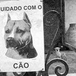 Cuidado, esse cão é perigoso kk Só q não