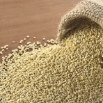 Saúde - Amaranto: Uma excelente fonte de ferro para as gestantes