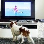 Animais - Canal de TV criado especialmente para os cachorros estreia na Alemanha