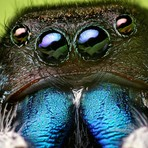Uma Aranha Predominatemente Vegetariana