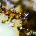 Animais - Misterioso verme brilhante descoberto no Peru