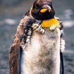 Animais - Comportamento anômalo dos pinípedes