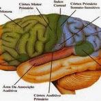 Saúde - Trabalhar em horários alternados envelhece o cérebro