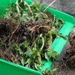 Hobbies - Como fazer para eliminar as ervas daninhas