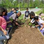 Unesco defende que desenvolvimento sustentável faça parte do currículo escolar