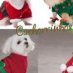 Roupinhas de natal para cachorro