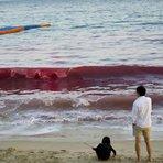 Na China, turistas foram testemunhas vivas do momento em que as águas do mar ficaram vermelhas na praia
