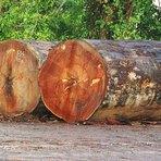 Agronegócio e a morte da Amazônia - Por Leão Serva