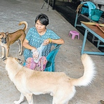 Consumo de carne de cachorro estaria com os dias contados