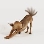 Como os cachorros usam seus rabos para falar?