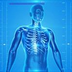 15 Curiosidades sobre o corpo humano