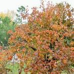 Poesias - Chegou o outono...