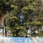 diHITT & Você - Comunidade do Coque luta para manter área verde