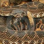 As dez cobras mais mortais domundo