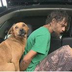 Vídeo - Cachorro não quis abandonar o dono e entra na viatura junto com homem acusado de roubos