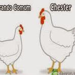 O que é um Chester?