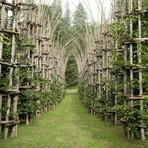 A Majestosa Catedral Feita De Árvores