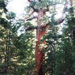 Conheça o parque Yosemite na California, um dos parques mais lindos do mundo!