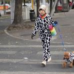 Nova moda chinesa: vestir cão com roupa igual à do dono