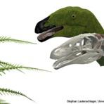 Morfologia Funcional em Organismos Fósseis