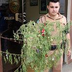 Policiais encontra um pé de maconha que estava sendo utilizada como pinheiro de natal