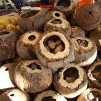 Os benefícios da castanha-do-pará