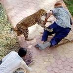 Imagens chocantes do momento em que o caçador vira caça