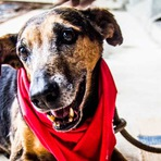 Prefeitura de SP promove campanha de Natal para adoção de pets 'idosos'