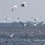 """Meio ambiente - Grupo internacional de cientistas redesenha a """"árvore da vida"""" dos pássaros"""