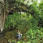 Meio ambiente - Mata Atlântica: Um Futuro para um Bioma quase no Fim